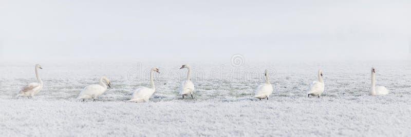 Bird, Water Bird, Freezing, Snow Free Public Domain Cc0 Image