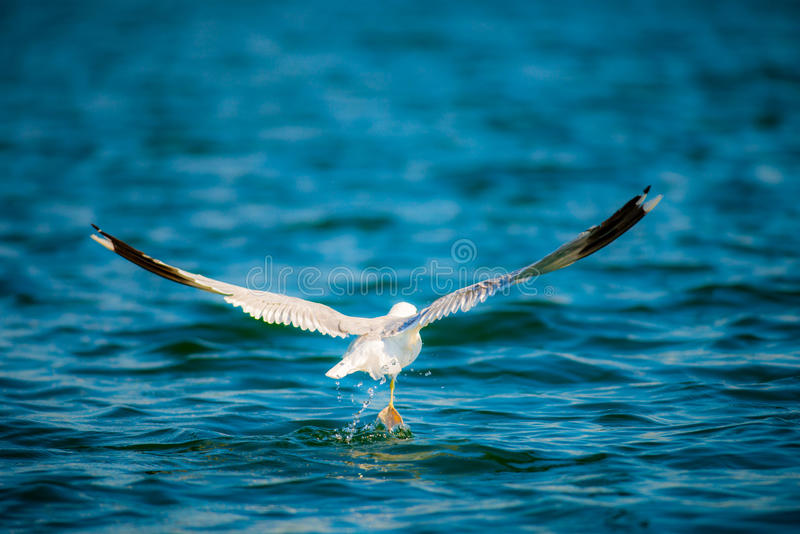 Bird and water royalty free stock image