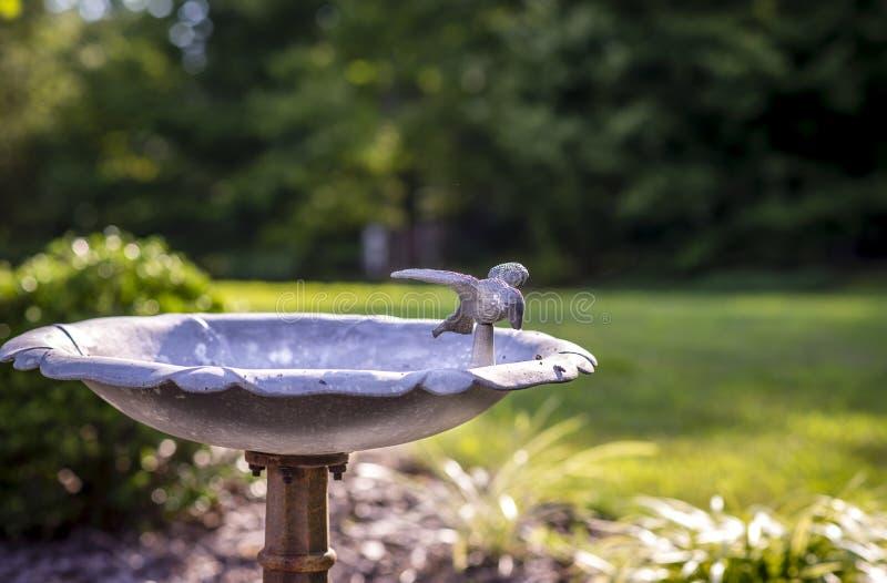 Bird Water Fountain stock photography