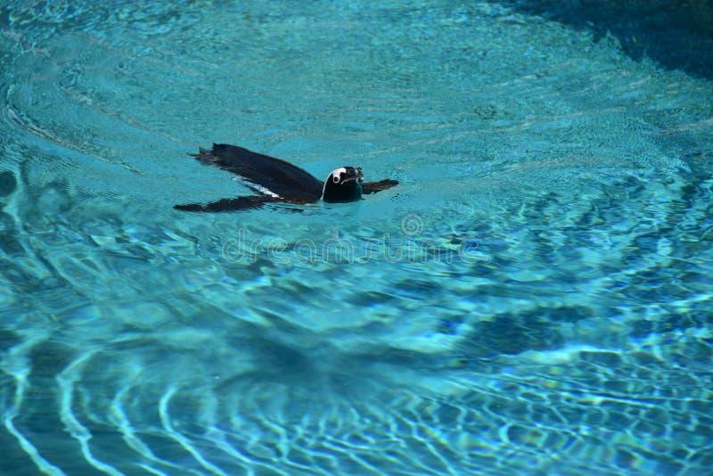 Bursa Zoo, Turkey. Bird water penguin sea whale ocean animal nature wildlife dolphin killer whale killer whale swimming stock images