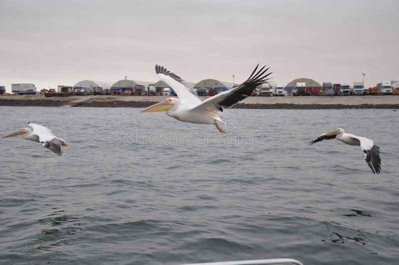 Bird, Water, Seabird, Sea Free Public Domain Cc0 Image