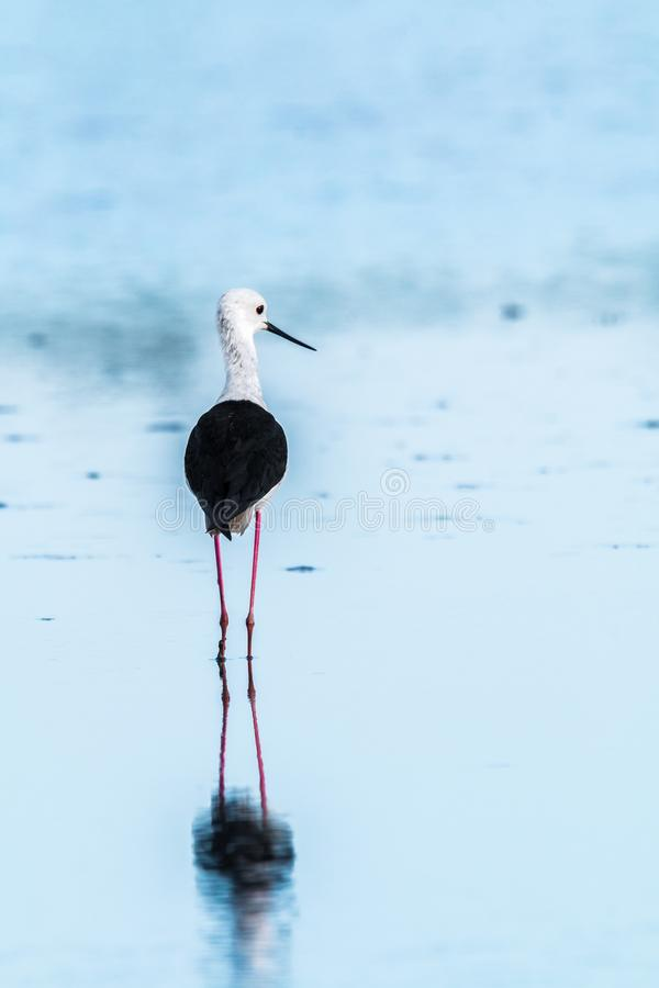 Bird, Water, Stilt, Shorebird Free Public Domain Cc0 Image