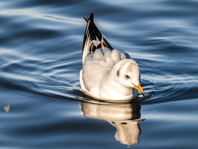 Bird, Water, Water Bird, Duck stock images