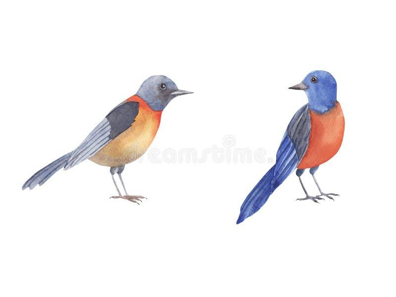 Bird watercolor set. Hand painted illustration little blue bird isolated on white background stock illustration
