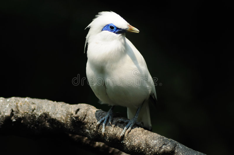 Bird, What are you looking? royalty free stock photo