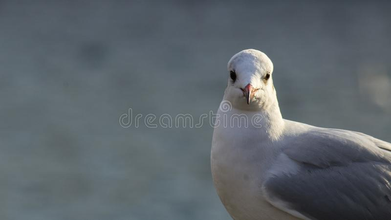 A bird stock photography