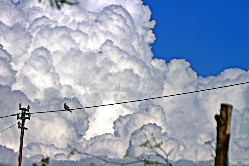 Bird in the white clouds. A bird stay in the clouds waiting the rain royalty free stock photography