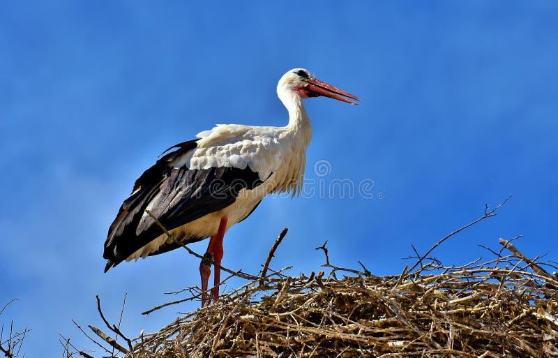 Bird, White Stork, Stork, Ciconiiformes Free Public Domain Cc0 Image