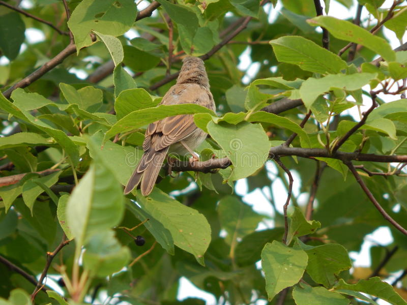 Bird in the wild stock photo