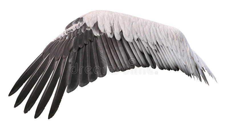 Bird wing cutout royalty free stock images