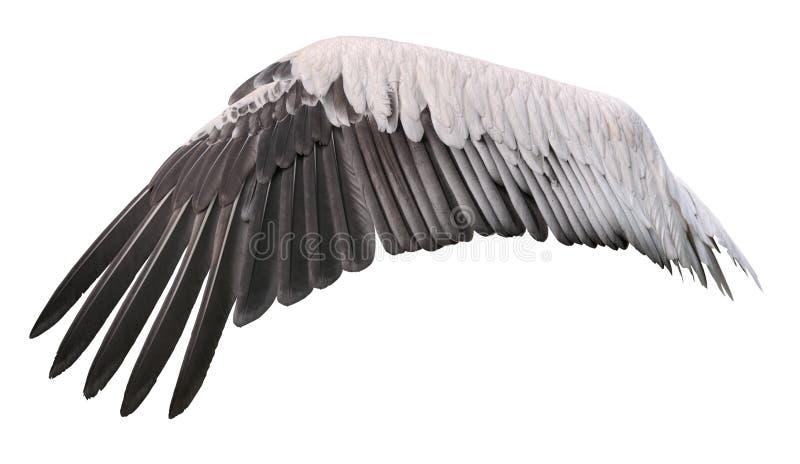 Bird wing cutout. Bird wing spread belongs to white great pelican