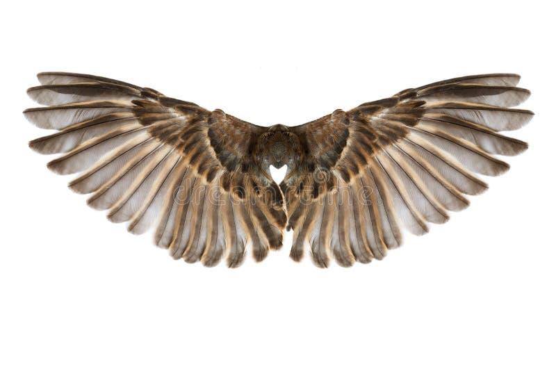 Bird wings isolated on white stock photos