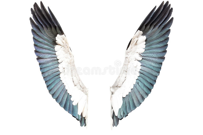 Bird wings isolated on white background royalty free stock image