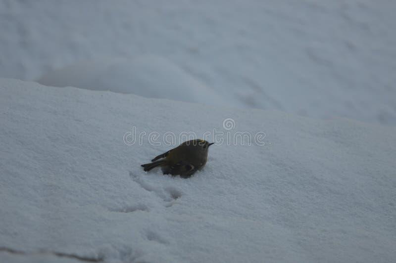 Bird. Winter, cold, bird, stay human royalty free stock photography