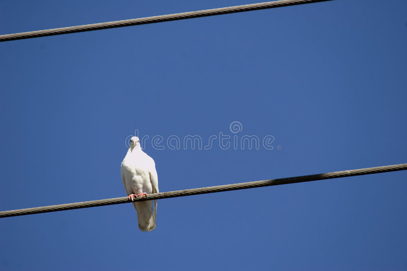 Bird On The Wire Royalty Free Stock Image