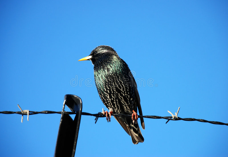Download Bird on a wire stock image. Image of background, head - 3760463