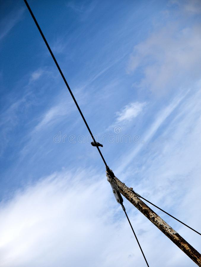 Bird on a wire, tilted photo. Bird on a wire with blue sky background. Pigeon sitting on a wire. Rusty post. Tilted photo royalty free stock images