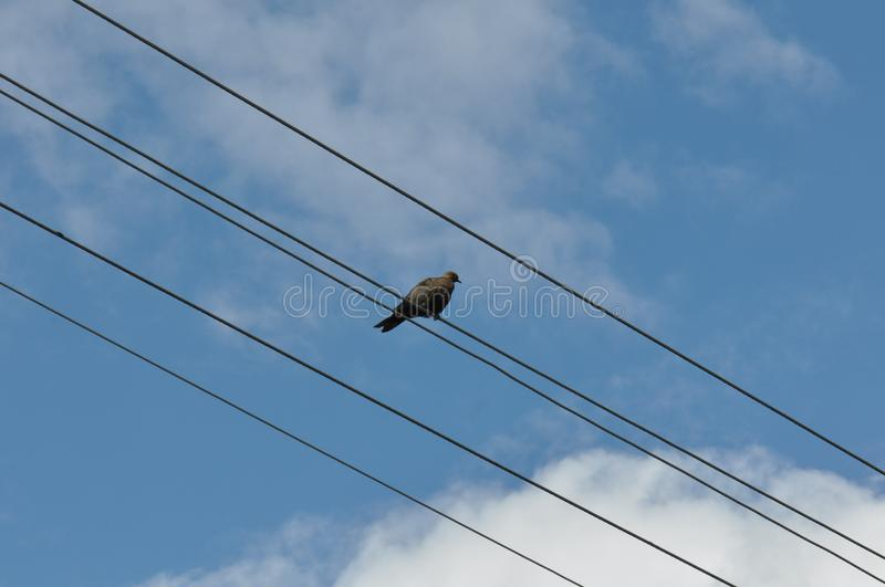 Bird on wire. Cute little little bird on electric wire with blurry background royalty free stock photo