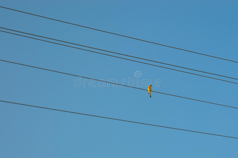 Bird on the wire. A little bird sitting on the wire of the power line royalty free stock photography