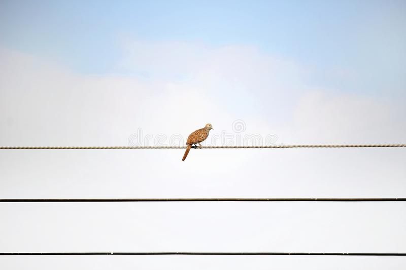 Bird on wire alone on sky stock photography