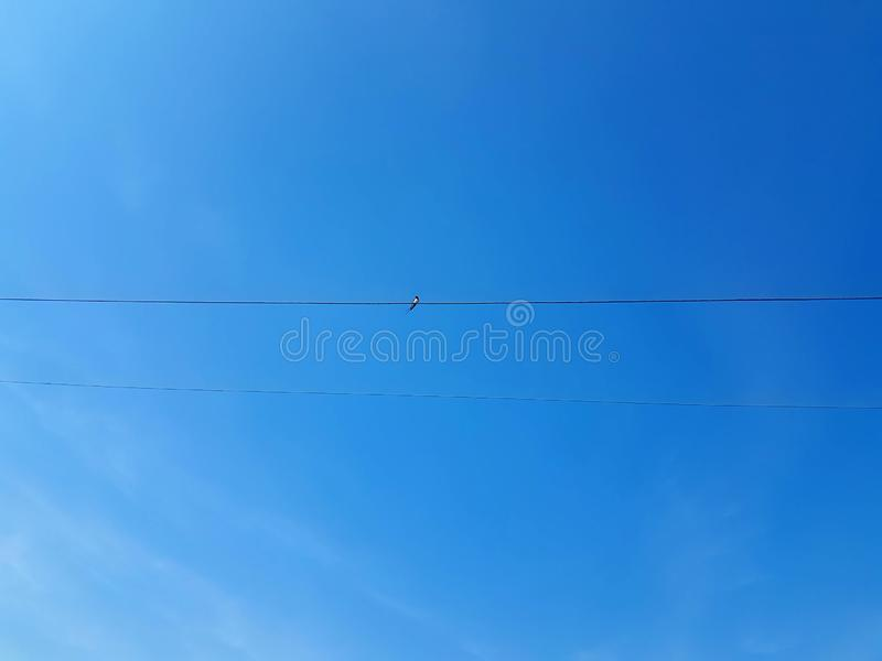 Bird on a wire power cable royalty free stock photography