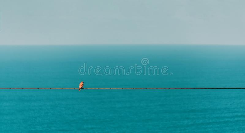Bird, wire, sea royalty free stock photography