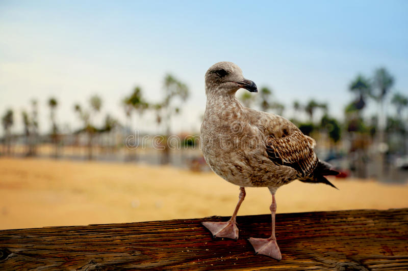 Bird on wood railing royalty free stock photo