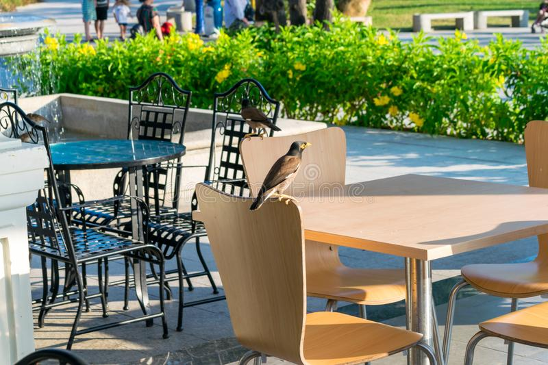 Bird on a wooden chair in an empty cafe. Bird on a wooden chair in empty cafe, table, restaurant, design, brown, outdoor, furniture, decoration, old, vintage royalty free stock photos