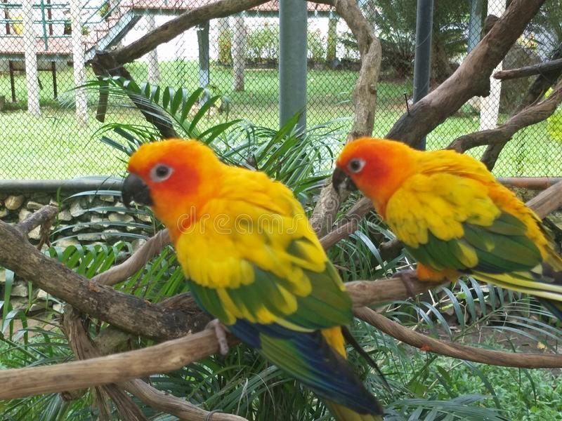 Bird in a zoo. Many species of birds are economically important as food for human consumption and raw material in manufacturing, with domesticated and stock photo