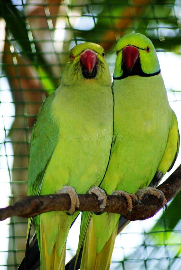 Bird01 image stock