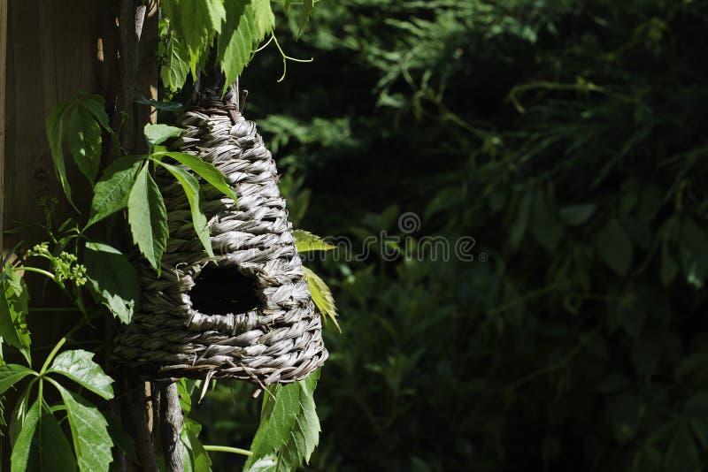 Birdbox fotos de stock royalty free