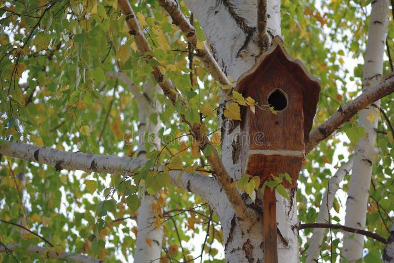 Birdbox on birch royalty free stock photos