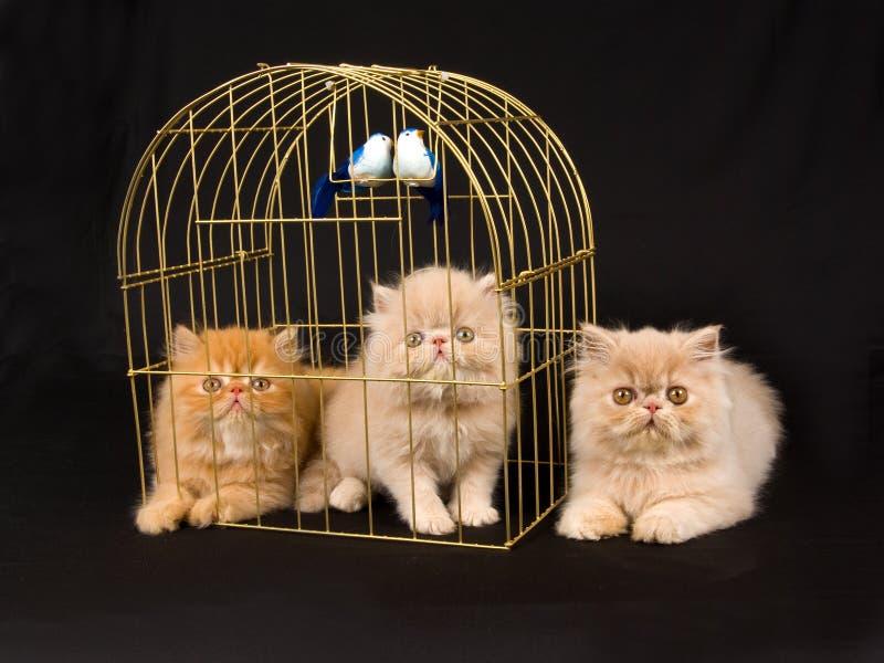 birdcage śliczny figlarek pers dosyć zdjęcia royalty free