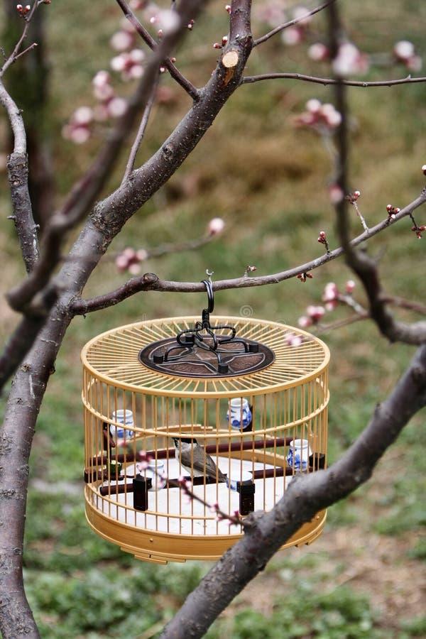 birdcage стоковые фотографии rf