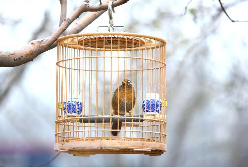 birdcage fotografia stock