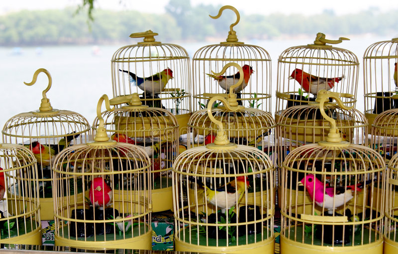 Birdcages fotografia stock libera da diritti