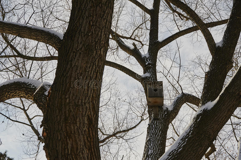 Birdhouse σε ένα δέντρο στοκ εικόνα με δικαίωμα ελεύθερης χρήσης