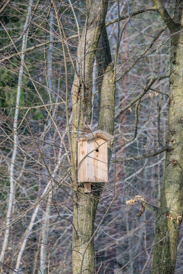 Birdhouse σε ένα δέντρο στο δάσος στοκ φωτογραφία με δικαίωμα ελεύθερης χρήσης