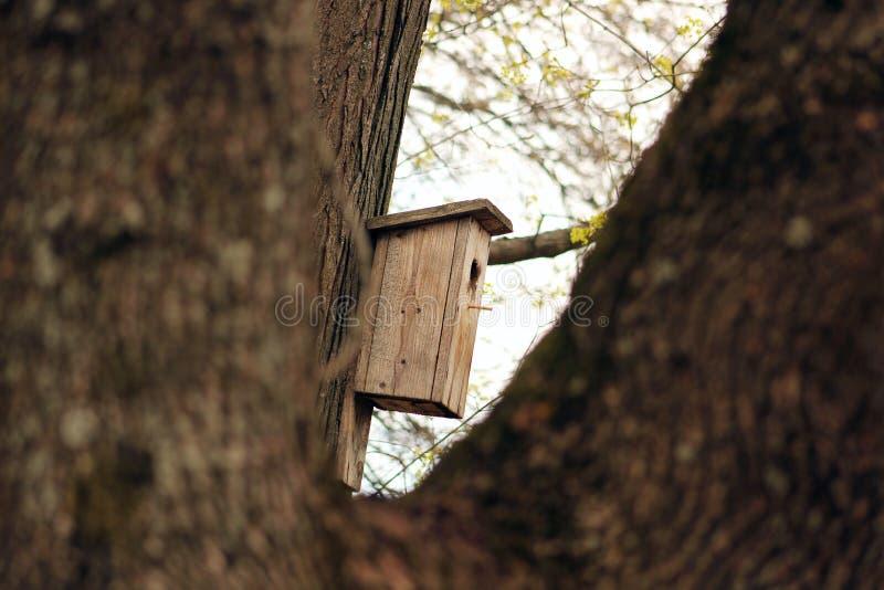 Birdhouse στο δέντρο o στοκ φωτογραφία με δικαίωμα ελεύθερης χρήσης