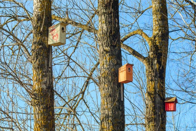 Birdhouse на дереве в парке стоковые фотографии rf