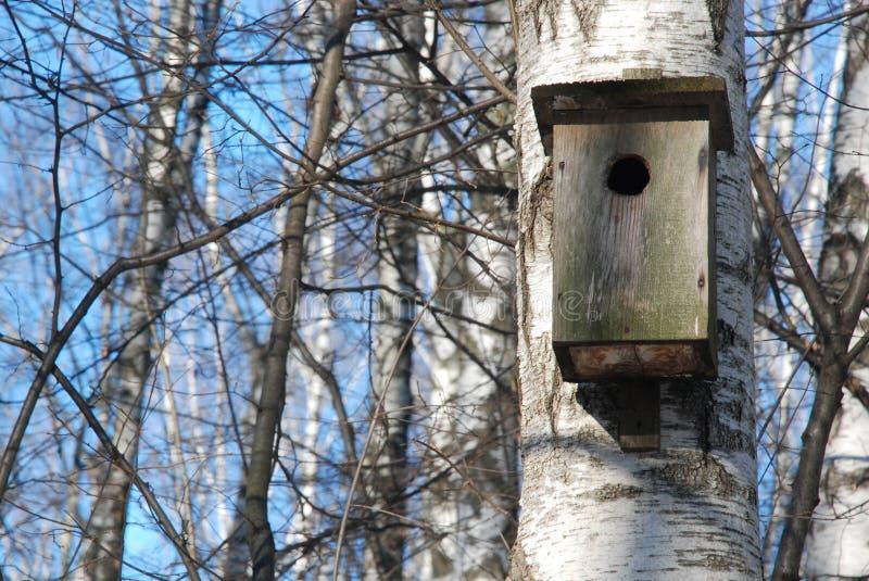 Birdhouse on a birch tree royalty free stock photos