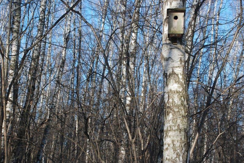 Birdhouse on a birch tree stock image