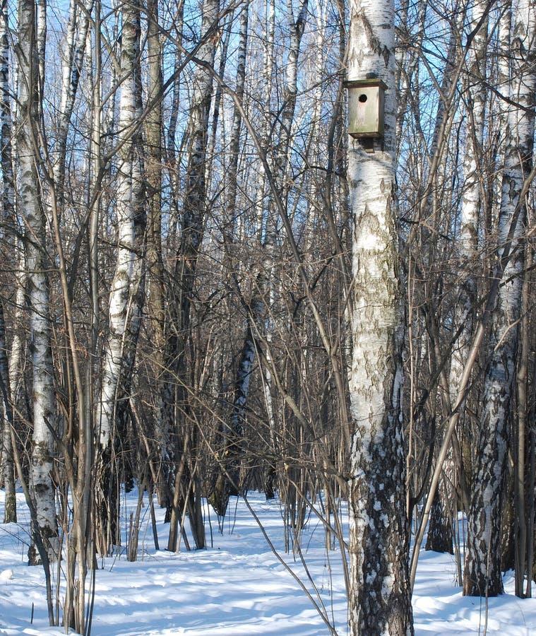 Birdhouse on a birch tree stock photos