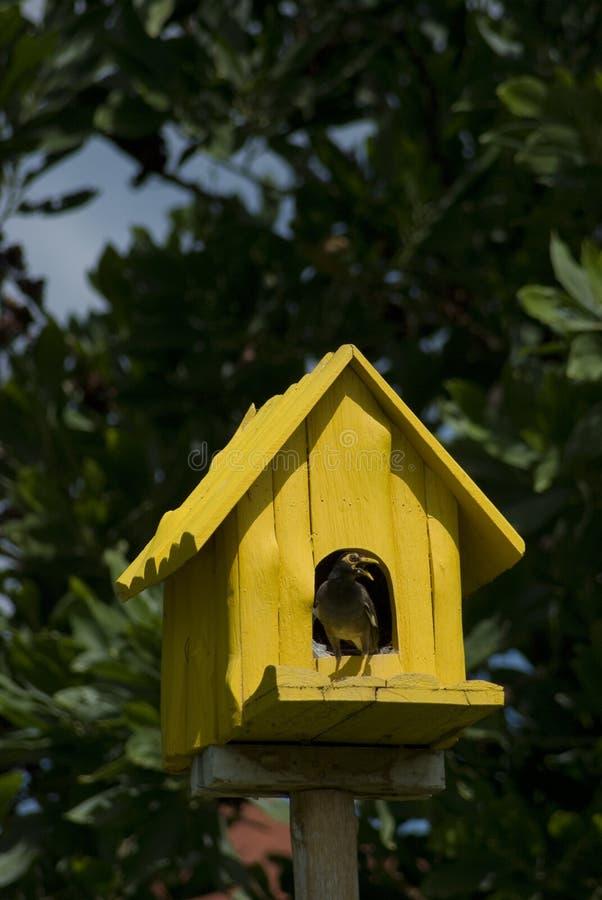 Birdhouse con l'uccello fotografia stock libera da diritti