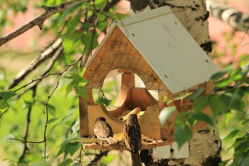 Birdhouse för fåglar arkivbild