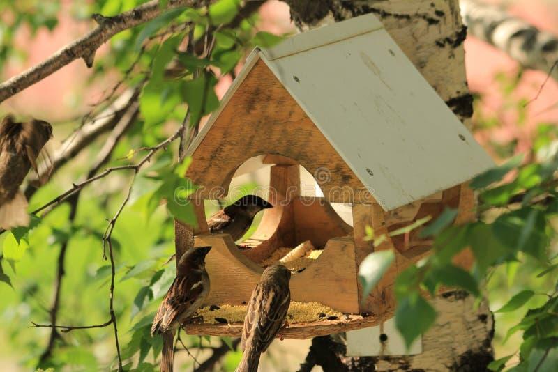 Birdhouse för fåglar royaltyfri foto
