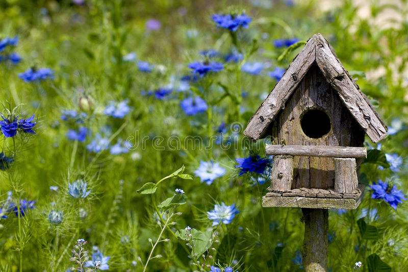 Birdhouse Among the Flowers. A birdhouse nestles among spring flowers