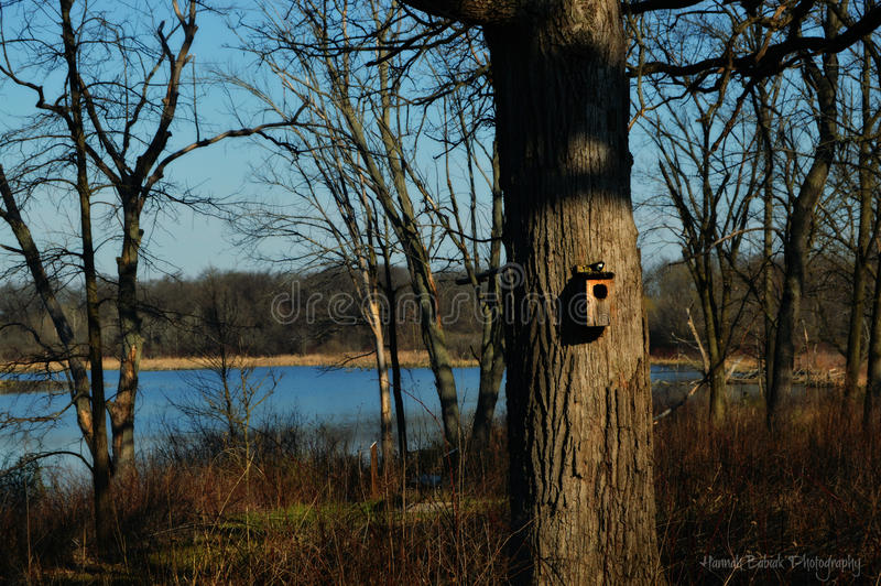 Birdhouse in Forest royalty free stock images