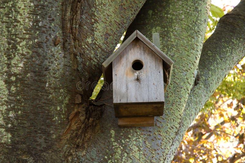 Download Birdhouse in Mossy tree stock image. Image of nest, bird - 1337617