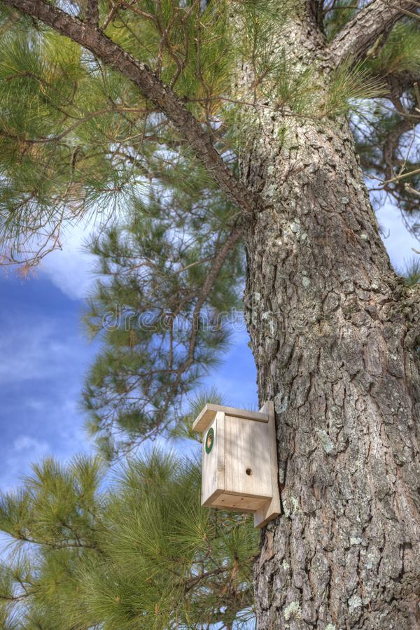 Download Birdhouse in pine tree stock photo. Image of trunk, birdhouse - 17839040